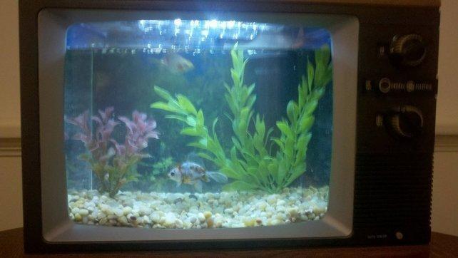 Masz stary TV ? No to masz gdzie trzymać rybki