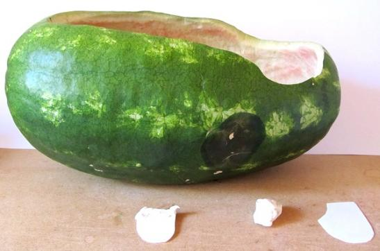 watermelon-rudders